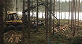 Metsänhoitopalvelut