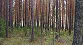 Metsäomaisuuden hoito