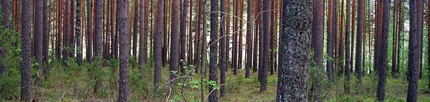 metsaomaisuuden-hoito